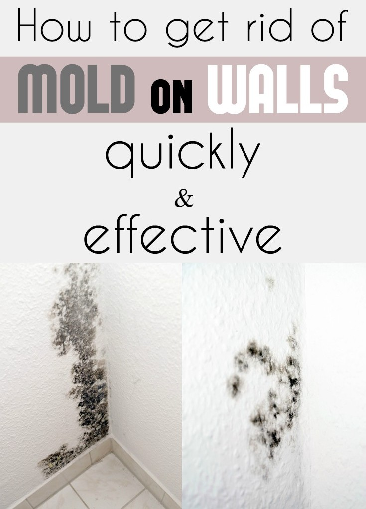 How To Get Rid Of Mold On Walls Quickly And Effectively Cleaning