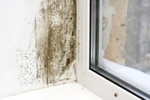 How to get rid of mold on walls quickly and effectively