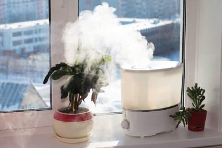 5 Plants That Will Absorb Excess Humidity In Your House