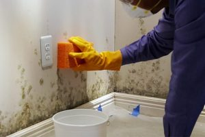 Easy And Effective Natural Solutions To Remove Mold From Your House