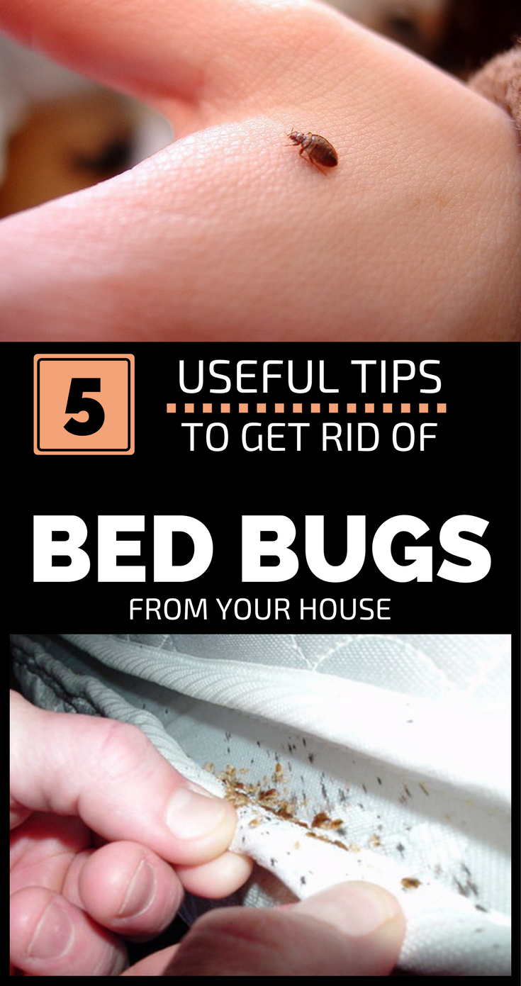 and get rid bugs of in to spray cleaning how care bed getting