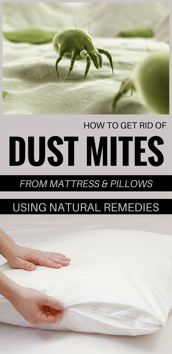 How To Get Rid Of Dust Mites From Mattress And Pillows Using Natural ...