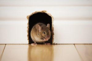 Friendly Method To Get Rid Of Mice Indoors Without Hurting Them