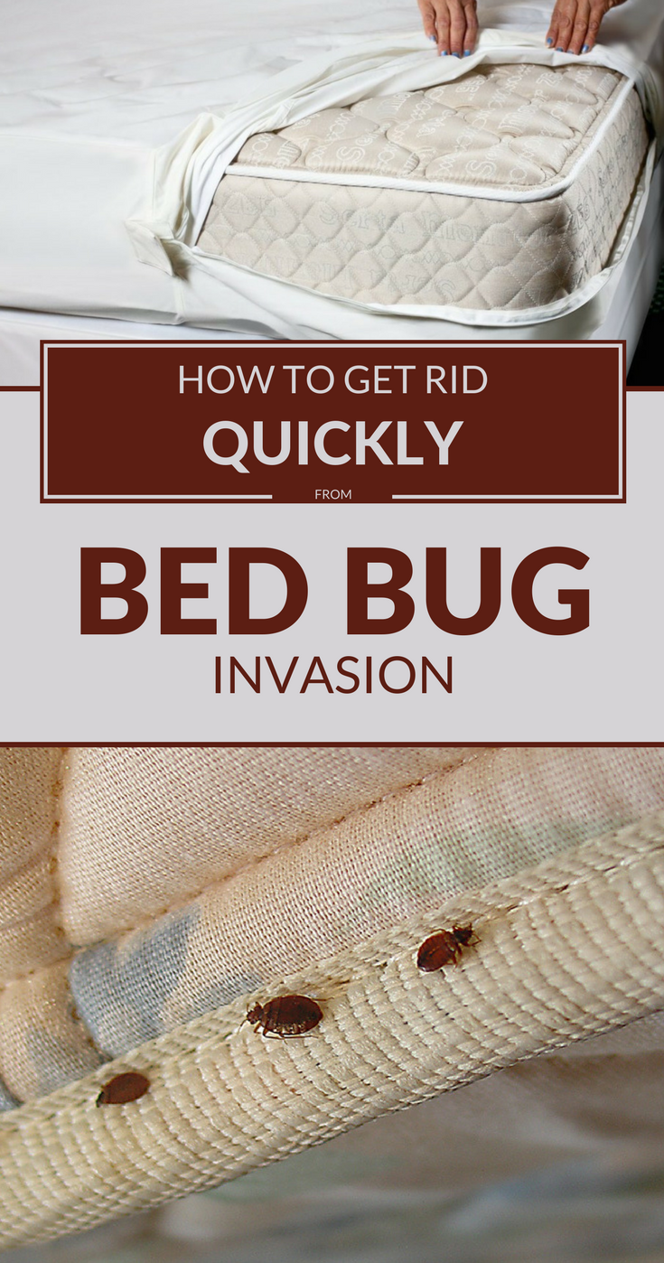 Wash All Clothes Bed Bugs